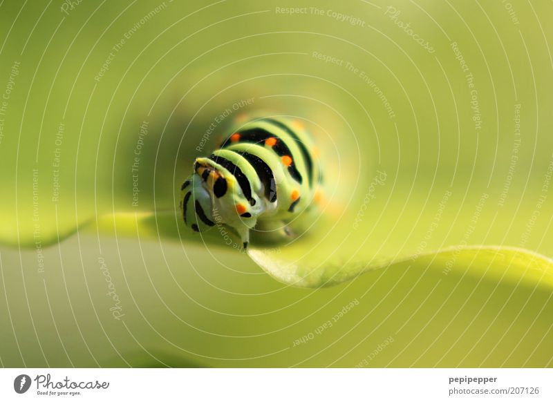 Nature Green Plant Summer Leaf Black Animal Yellow Esthetic Animal face Stripe Point Natural Exceptional Macro (Extreme close-up) Crawl