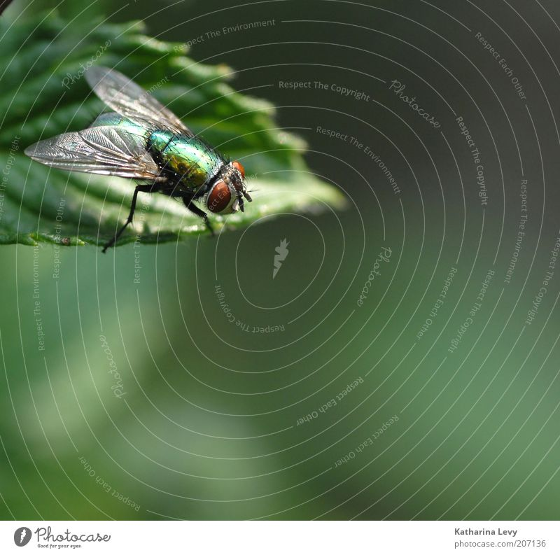 On the lookout Nature Plant Animal Spring Summer Beautiful weather Leaf Wild animal Fly 1 Observe Authentic Free Small Gold Green Perspective Environment