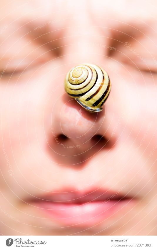 Nose snail II Human being Feminine Woman Adults Female senior Face 1 45 - 60 years Animal Wild animal Snail Small Yellow Pink Black Eyes Mouth Portrait format