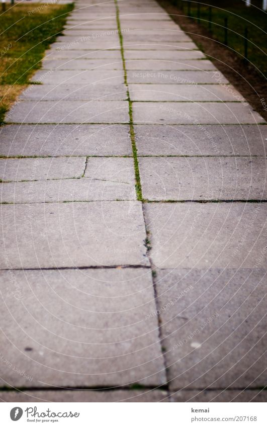 Nature Green Loneliness Street Gray Lanes & trails Arrangement Gloomy Broken Simple Sidewalk Moss Seam Stone slab