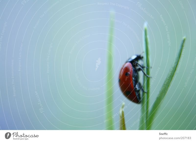Nature Movement Grass Copy Space Success Target To hold on Insect Blade of grass Upward Crawl Optimism Beetle Go up Advancement Ladybird