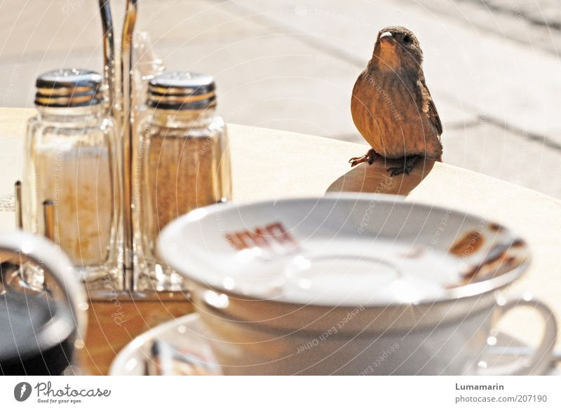 Waiter Animal Bird 1 Sit Friendliness Beautiful Small Funny Near Curiosity Cute Brown Moody Happiness Trust Love of animals Hospitality Visitor Guest Gastronomy