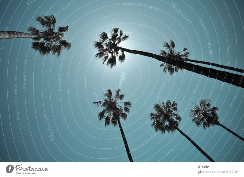 Under palm trees (2) Summer Summer vacation Nature Sky Cloudless sky Sun Sunlight Climate Weather Beautiful weather Plant Exotic Palm frond Illuminate Growth