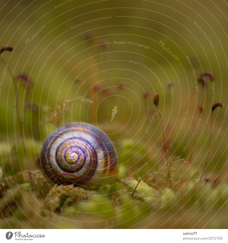 Hiding in the moss Nature Earth Autumn Plant Moss Blossom Foliage plant Forest Animal Snail Brown-lipped snail Mollusk 1 Natural Round Soft Green Loneliness