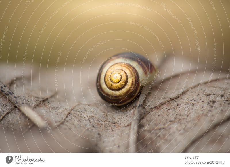 finiteness Nature Earth Autumn Plant Leaf Forest Snail Snail shell Brown-lipped snail Dark Natural Round Yellow Gray Calm Grief Loneliness End