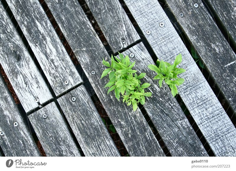 Nature Green Plant Leaf Black Life Wood Gray Power Small Environment Force Growth Climate Footbridge Silver