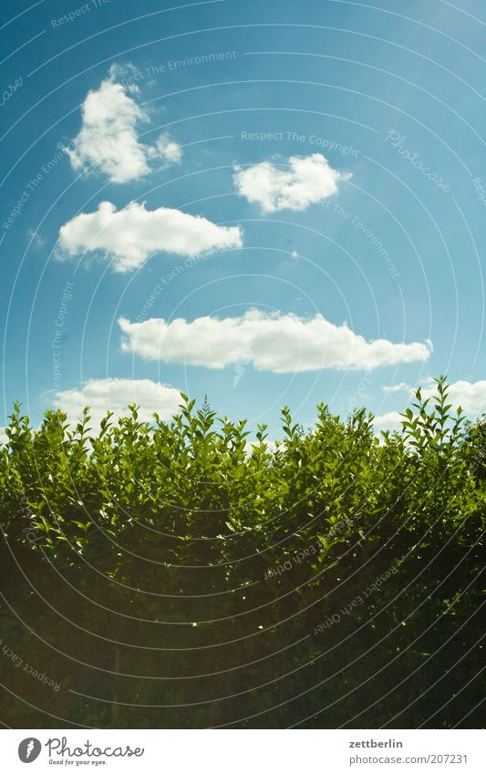 Sky Green Summer Leaf Clouds Spring Bushes Border Fence Beautiful weather Hedge Blue sky Neighbor Boundary Leaf green