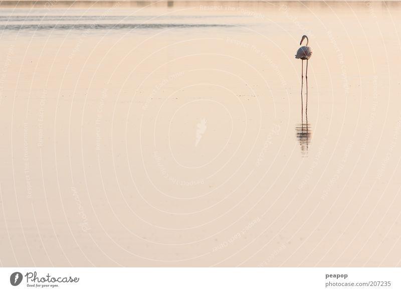 flamants Animal Lake Bird Pink Pond Morning Water Tropical Flamingo Ornithology Freshwater Wader
