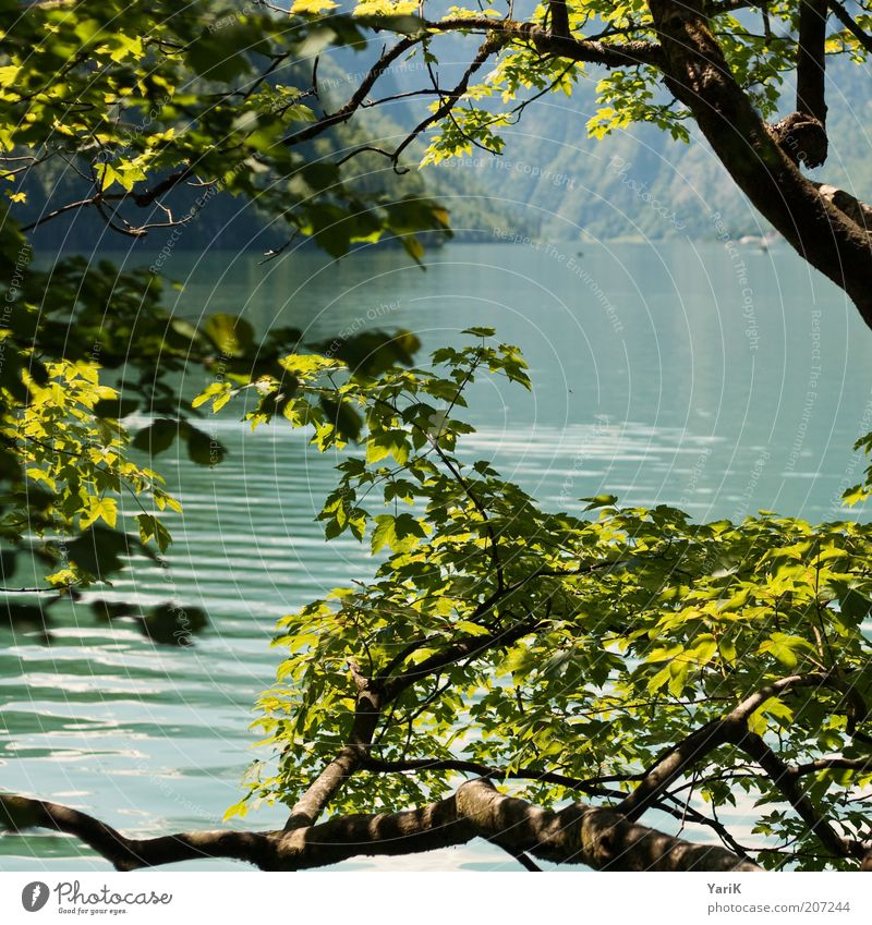Nature Water Tree Green Summer Vacation & Travel Calm Leaf Relaxation Mountain Spring Freedom Lake Waves Germany