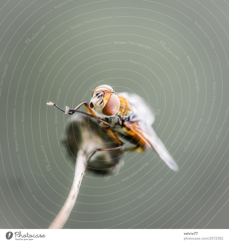 cleaning break Nature Animal Stalk Wild animal Fly Animal face Wing 1 Observe Above Brown Gray Ease Break Cleaning Compound eye Panorama (Format) Colour photo