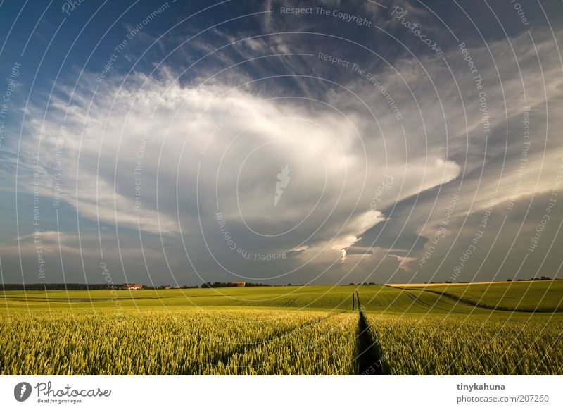 Finally rain! Grain Summer Landscape Storm clouds Thunder and lightning Agricultural crop Field Threat Infinity Warmth Blue Yellow Green Loneliness Horizon