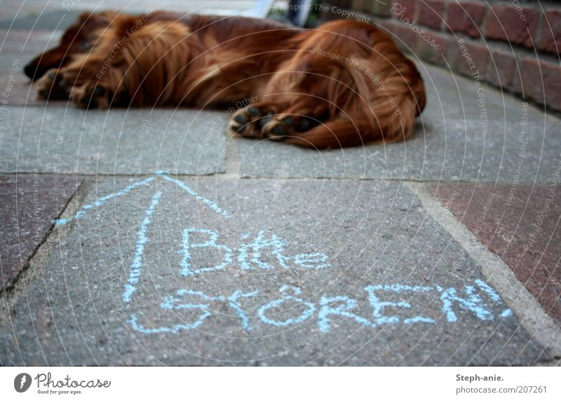 Troublemaker. Chalk Pet Dog Pelt Paw 1 Animal Sleep Funny Blue Disruptive element Annoy Provocative Arrow Siesta Demand Clue Absurdity Street dog Chalk drawing