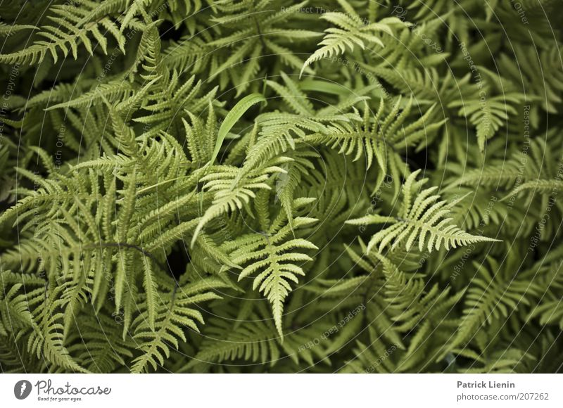 green confusion Environment Nature Plant Summer Fresh Fern Muddled Green Point Calm Contrast Colour photo Detail Deserted Day Fern leaf Exceptional