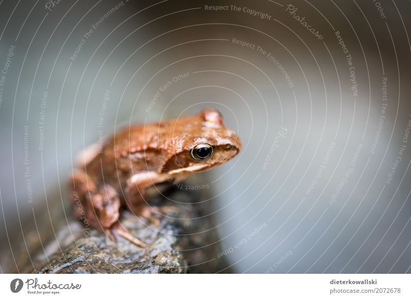 frog Environment Nature Landscape Animal Spring Summer Forest Brook Farm animal Wild animal Frog 1 Tree frog Colour photo Subdued colour Exterior shot Day