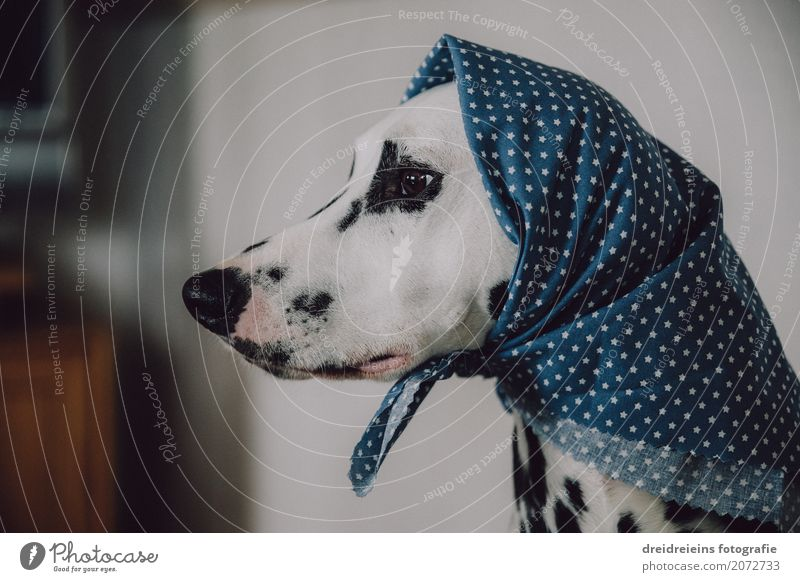 Funny old woman with headscarf Headscarf Animal Pet Dog 1 Observe Looking Wait Old Cool (slang) Nerdy Cute Retro Feminine Judicious Wisdom Loneliness