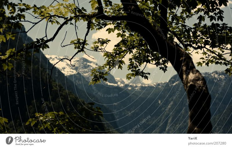 Nature Tree Green Summer Vacation & Travel Calm Relaxation Mountain Freedom Air Germany Vantage point Leisure and hobbies Alps Bavaria