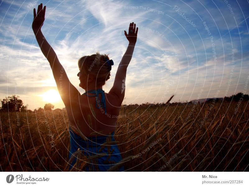 Summer evening V Feminine Woman Adults Skin Back Arm Hand Fingers Environment Nature Landscape Sky Sunrise Sunset Weather Beautiful weather Field Free Joy