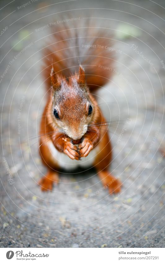 something sweet? Environment Nature Animal Wild animal Squirrel Rodent 1 To enjoy Authentic Calm Appetite Voracious Contentment Delicious Natural To hold on