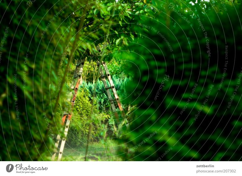 Green Plant Calm Garden Mysterious Ladder Depth of field Hedge Vista Copy Space Garden plot Leaf green Garden allotments