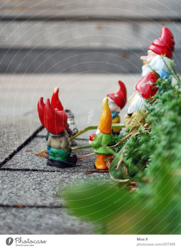 dwarf uprising Leisure and hobbies Living or residing Garden Decoration Communicate Small Dwarf Garden gnome Santa Claus hat Assembly Discussion Colour photo