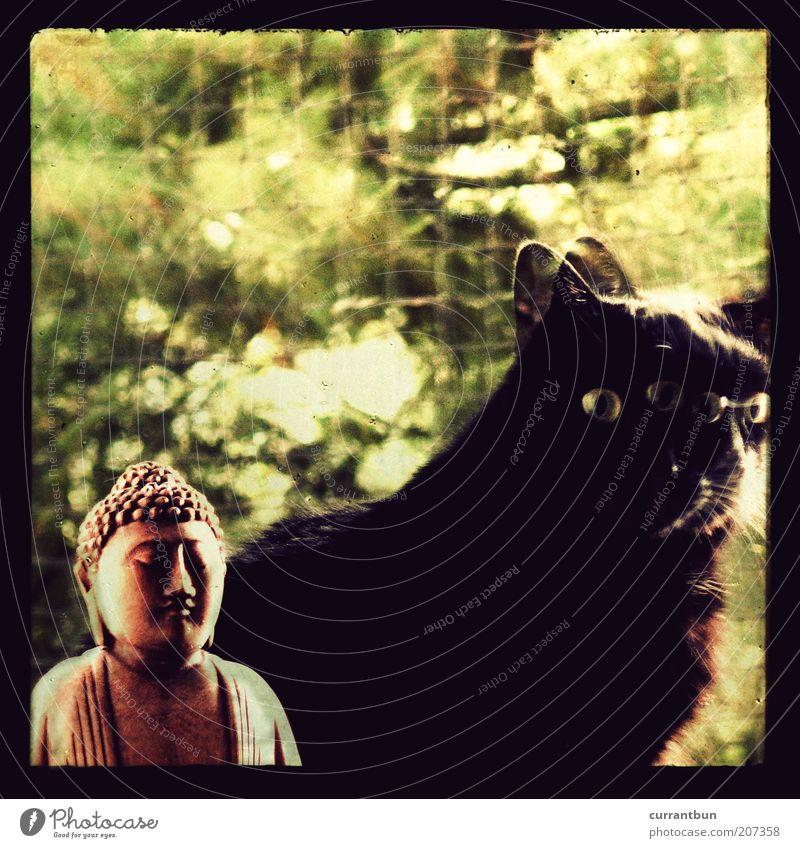 Green Black Cat Brown Pelt Lomography Sculpture Holy Idea Double exposure Religion and faith Deities Domestic cat Buddha Inspiration Experimental