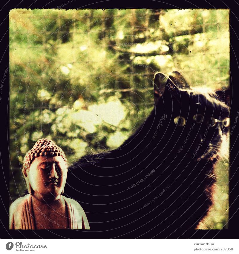 Green Black Cat Brown Pelt Lomography Sculpture Holy Idea Double exposure Religion and faith Deities Domestic cat Buddha Inspiration Experimental