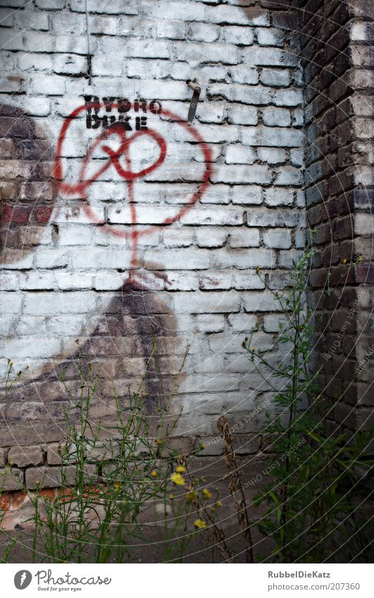 Old White Plant Red Summer Dark Wall (building) Gray Stone Wall (barrier) Graffiti Brown Dirty Concrete Facade Characters