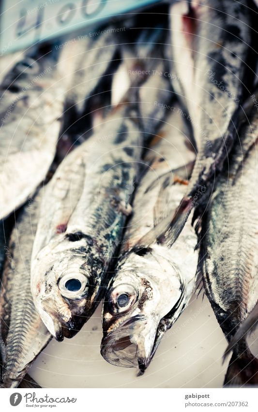 Black Eyes Nutrition Animal Gray Glittering Food Fish Animal face Fish eyes Fish market Market stall Fish head Dead animal