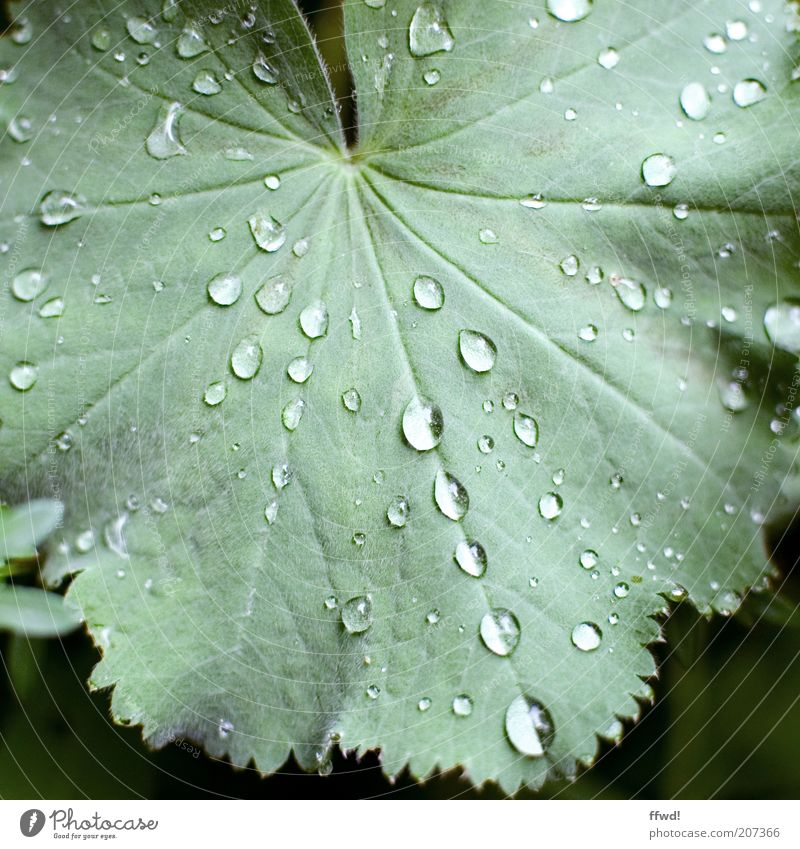 rainy season Environment Plant Water Drops of water Rain Leaf Wet Natural Purity Growth Dew Colour photo Exterior shot Day Rachis Leaf green Leaf filament