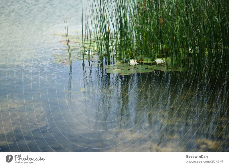 Nature Water Beautiful Green Plant Emotions Grass Lake Warmth Contentment Moody Environment Esthetic Authentic Aquatic plant Depth of field
