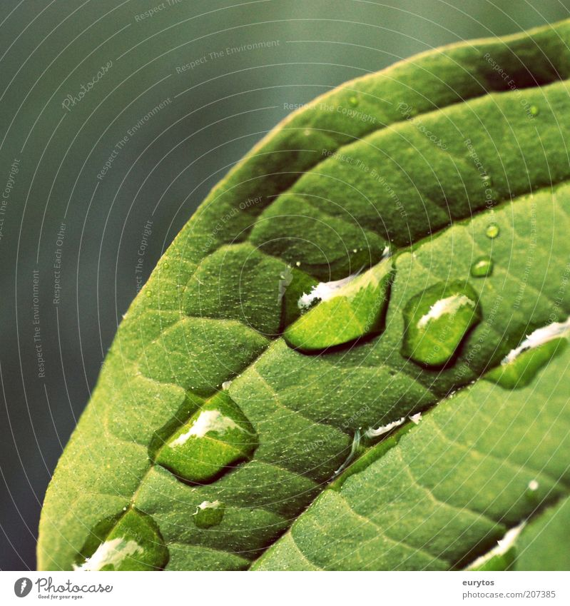 Nature Green Plant Leaf Life Rain Weather Environment Drops of water Clean Dew Exotic Wisdom Thirst Rachis