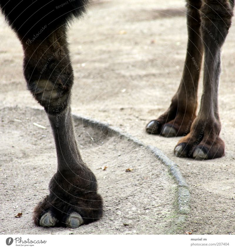 Animal Gray Sand Stone Legs Brown Earth Animal foot Stand Pelt Zoo Exotic Paw Unwavering Animal tracks