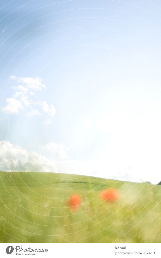 Nature Sky Green Blue Plant Red Summer Clouds Blossom Grass Warmth Landscape Field Environment Island Climate