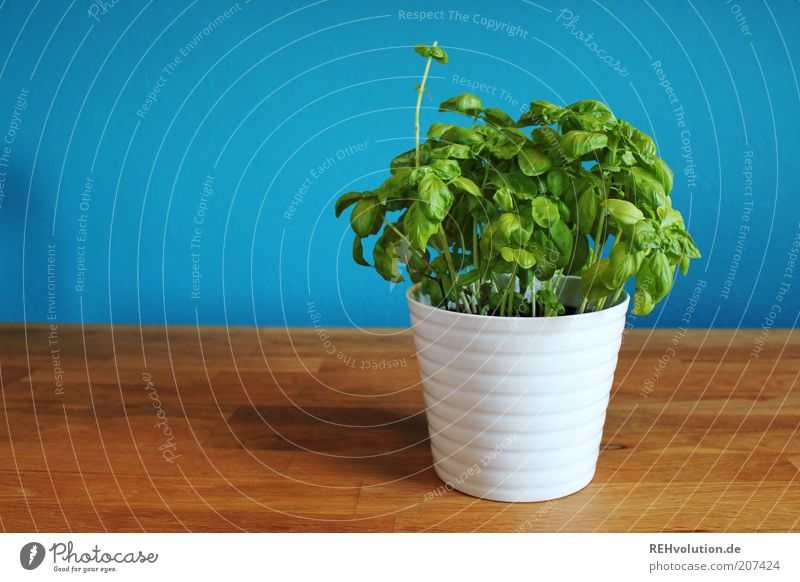 White Green Blue Plant Wall (building) Wood Table Simple Natural Herbs and spices Delicious Ecological Cyan Tasty Time Nutrition