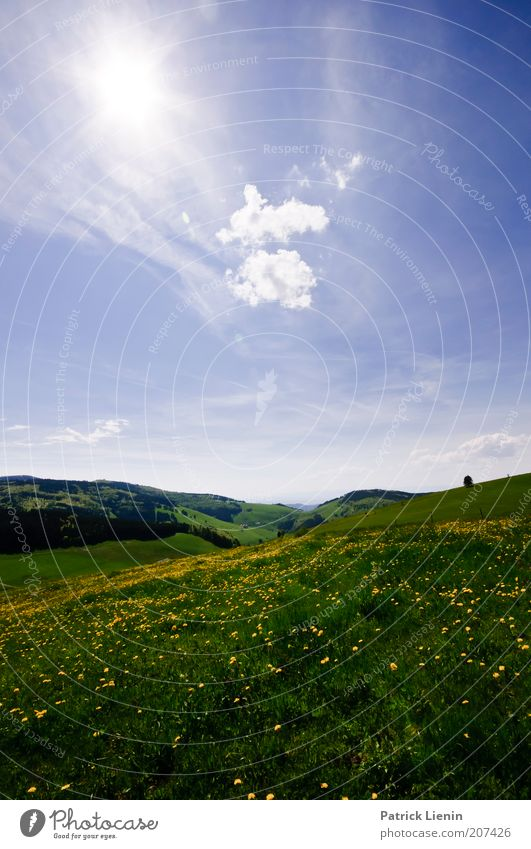 summer meadow Environment Nature Landscape Plant Air Sky Clouds Sun Sunlight Summer Climate Weather Beautiful weather Flower Grass Meadow Blossoming Yellow Blue