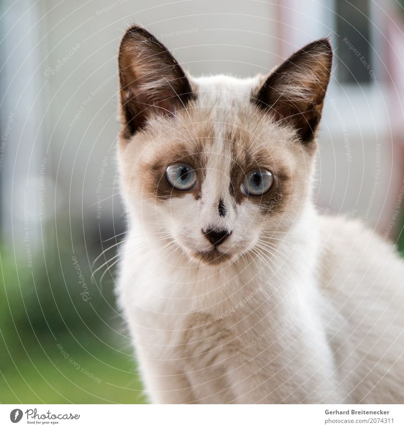 Cat 267 Animal Pet 1 Observe Curiosity Cute Love of animals Colour photo Animal portrait Looking Looking into the camera Forward
