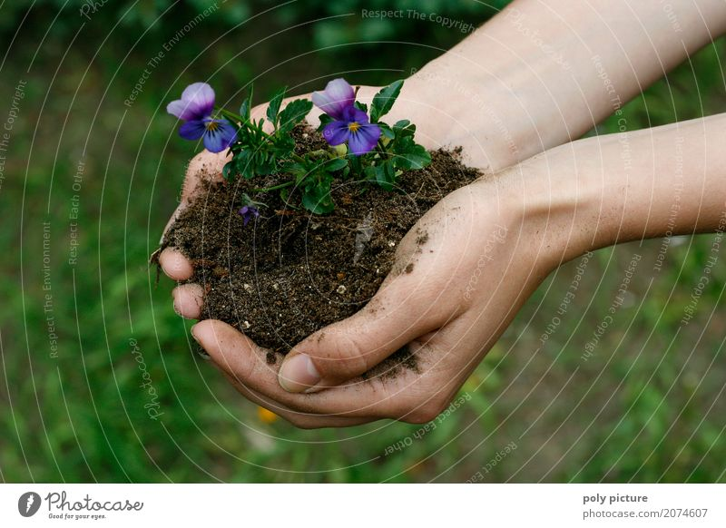 Pansies in the hand Summer Garden Child Work and employment Gardening Agriculture Forestry Human being Woman Adults Man Youth (Young adults) Senior citizen Life