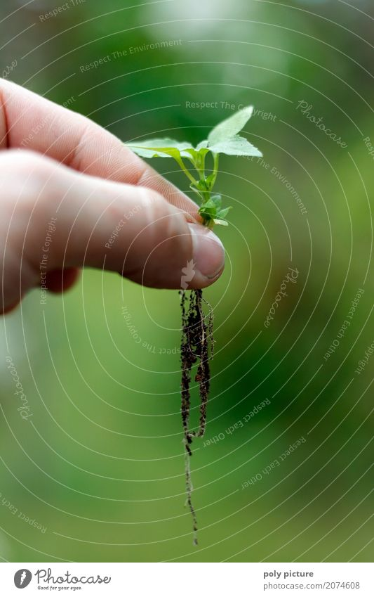 offshoot Summer Garden Child Work and employment Gardening Agriculture Forestry Fingers Environment Nature Plant Earth Sand Spring Flower Leaf Foliage plant