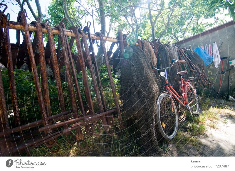 Tree Red Summer Warmth Bicycle Transport Net Climate Illuminate Wheel Fence Beautiful weather Laundry Backyard Means of transport Environment