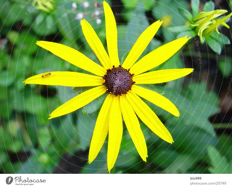 Flower Plant Yellow Garden