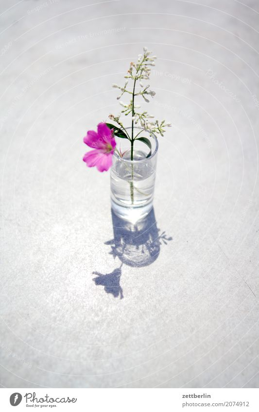 Sky Nature Vacation & Travel Plant Summer Tree Flower Relaxation Calm Blossom Meadow Grass Garden Copy Space Glass Bushes
