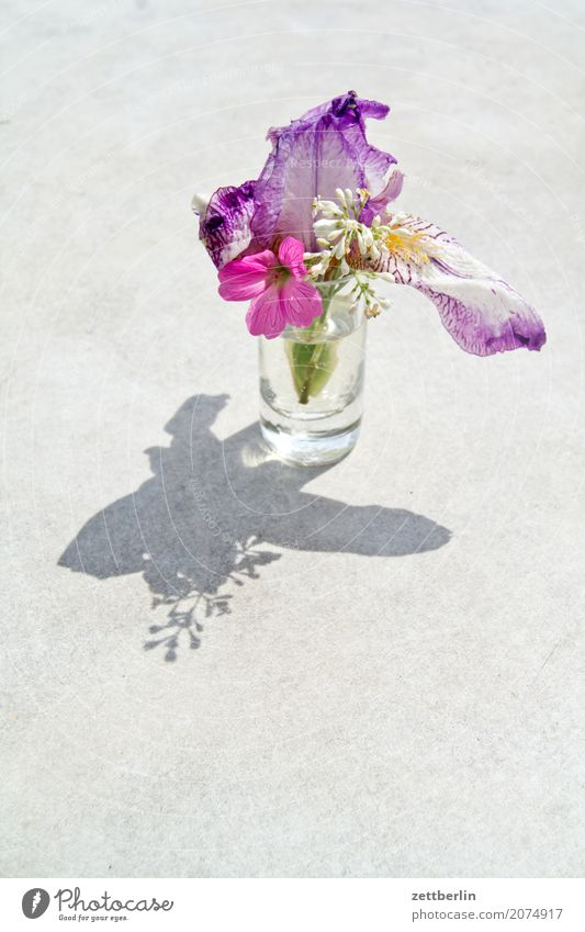 Photo for girls Branch Flower Blossoming Relaxation Vacation & Travel Garden Deserted Nature Plant Lawn Calm Summer trunk Bushes Copy Space Twig Vase Glass Girl
