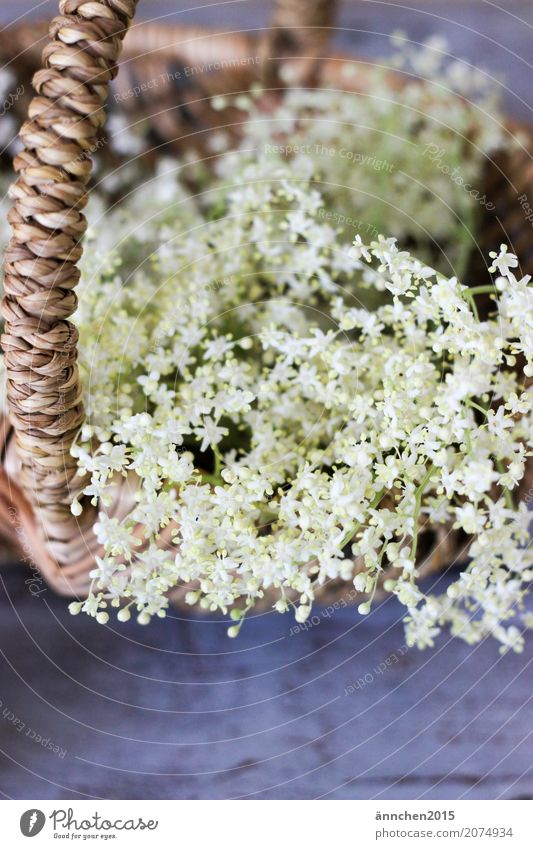 blossoms Blossom Elder Elderflower White Spring Summer amass Basket Harvest Brown Green Interior shot Delicate Beautiful Small Process