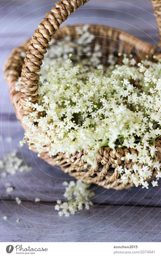 flowerage Blossom Elder Elderflower White Spring Summer amass Basket Harvest Brown Green Interior shot Delicate Beautiful Small Process