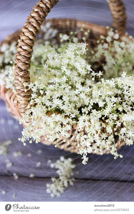 love of flowers Blossom White Nature Green Basket Elder Elderflower Brown Delicate Interior shot Detail Collection Accumulate Harvest Syrup