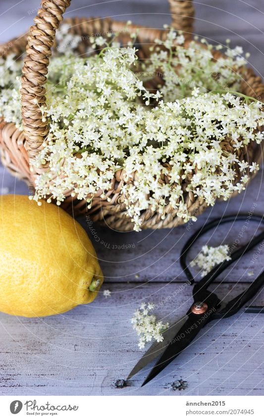 Elderflower harvest II Self-made Syrup Lemon Summer Spring Nature Blossom White Yellow Basket Scissors Cut Harvest Pick Make Apiaceae Forest Meadow Field Garden
