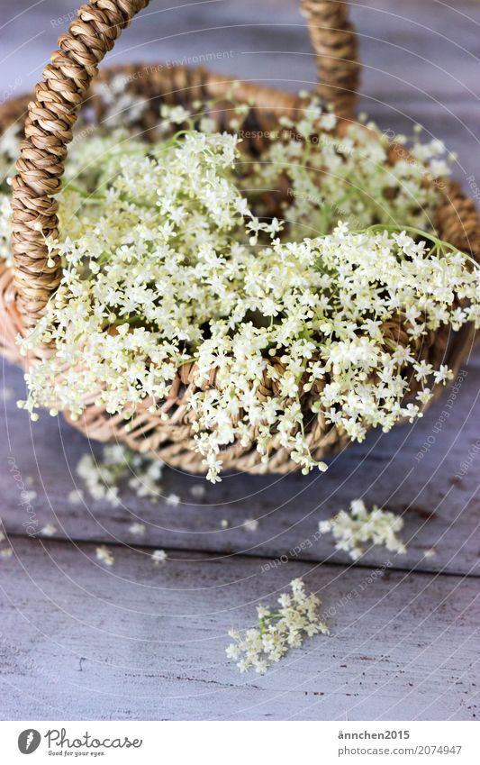 Nature Plant Summer Green White Blossom Spring Small Delicate Search Harvest Collection Basket Accumulate