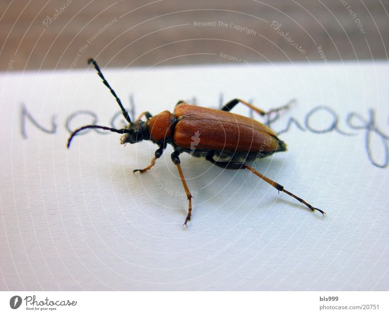 surprise visit Animal Insect Transport Beetle Nature