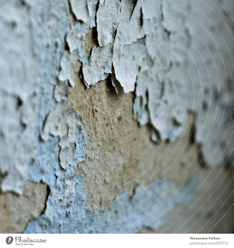 Wall (building) Gray Dye Wallpaper Derelict Decline Mold Flake off Light blue Run-down Cavernous Ravages of time