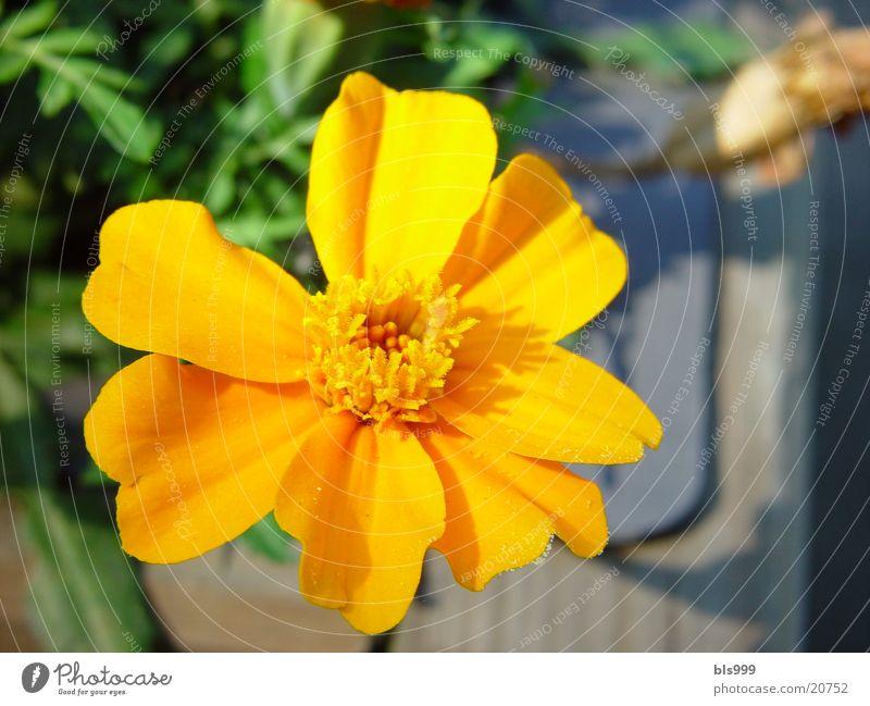 Orange Power Flower Summer Garden Plant Sun Nature